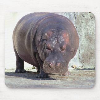 Flusspferd-Foto Mousepads