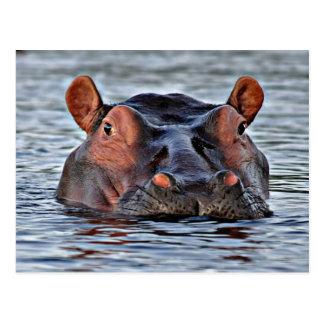 Flusspferd Postkarte