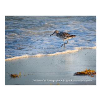 Flussuferläufer in den Wellen: Postkarte