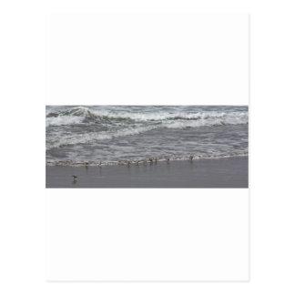 Flussuferläufer u. Oregon-Brandung Postkarte