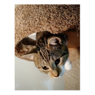 Förster die Katze Postkarte