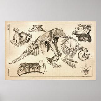 Fossil-Knochen-Skeleton Tieranatomie-Druck Poster