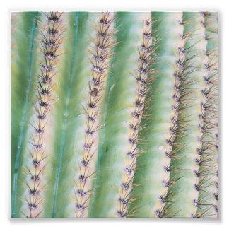 Foto-Druck der Saguaro-Nahaufnahme-| Fotodruck