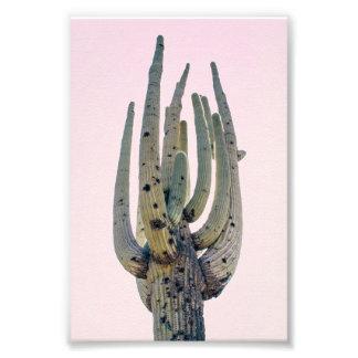 Foto-Druck des Saguaro-Ausschnitt-  Fotodruck