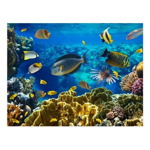 Foto eines tropischen Fisches auf einem Korallenri Postkarte