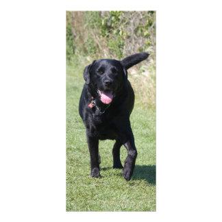 Foto Labrador-Retrievers schwarzer Hunde, Werbekarte