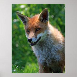 Foto-Porträtdruck Fox roter schöner, Plakat