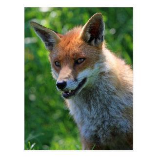 Foto-Porträtpostkarte des Fuchses rote schöne Postkarte