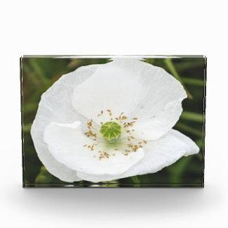 Fotoblock mit Blumen