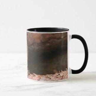 Fotografie eines Rotkehlchens, das auf Klotz sitzt Tasse