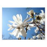 Fotografiekunst druckt blauer Himmel-Magnolien-Blu