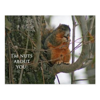 Fox-Eichhörnchen - ich bin über Sie Nuts! Postkarte