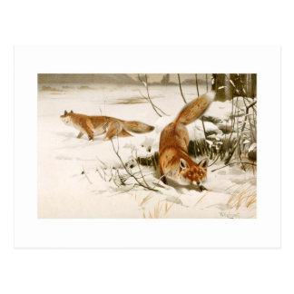 Fox Postkarte