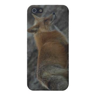 Fox-wild lebende Tiere iPhone Fall Etui Fürs iPhone 5