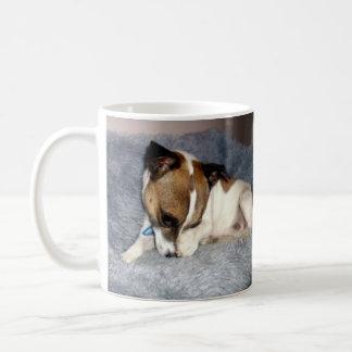 Foxterrier, oh so schüchterne, weiße Kaffeetasse
