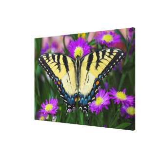Frack-Schmetterling auf Gänseblümchen Leinwanddruck