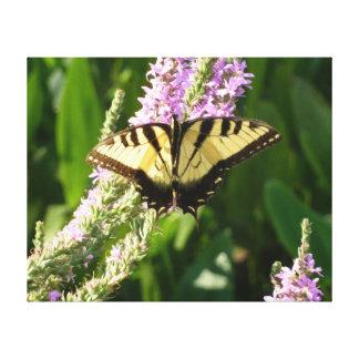 Frack-Schmetterling auf lila Wildblumen Leinwanddruck