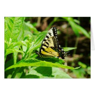 Frack-Schmetterling auf Milkweed-Pflanze Karte