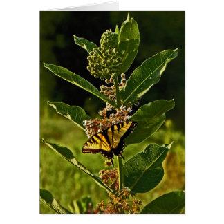Frack-Schmetterling auf Pflanzen-Anmerkungs-Karte Karte