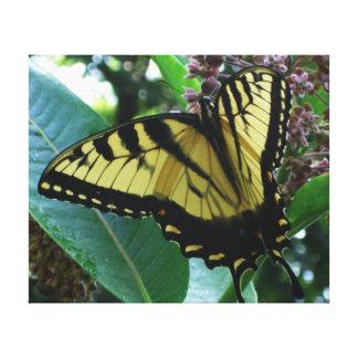 Frack-Schmetterling I auf Milkweed bei Shenandoah Leinwanddruck