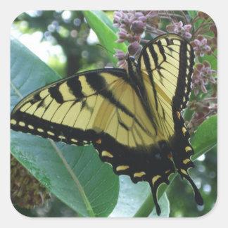 Frack-Schmetterling I auf Milkweed bei Shenandoah Quadratischer Aufkleber