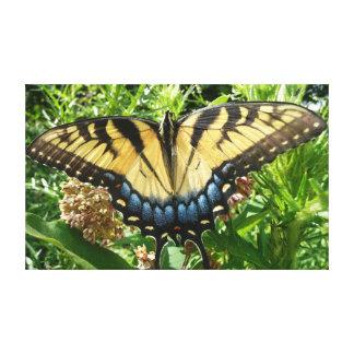 Frack-Schmetterling II bei Shenandoah Leinwanddruck