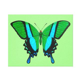 Frack-Schmetterling im Grün, im Türkis u. im Leinwanddruck