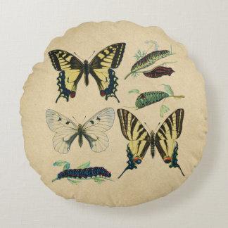 Frack-Schmetterlinge, Raupen und Motte Rundes Kissen
