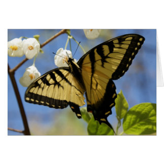 Frack-Schmetterlings-Mitteilungskarten Karte