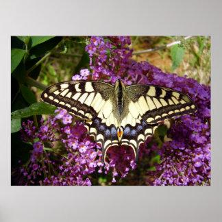 Frack-Schmetterlings-Plakat Poster