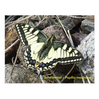 Frack-Schmetterlings-Postkarte Postkarte