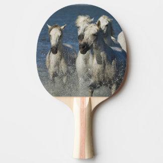 Frankreich, Camargue. Pferde laufen gelassen durch Tischtennis Schläger