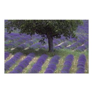 Frankreich, PACA, Albes-De-Haute-Provence, 2 Fotografie