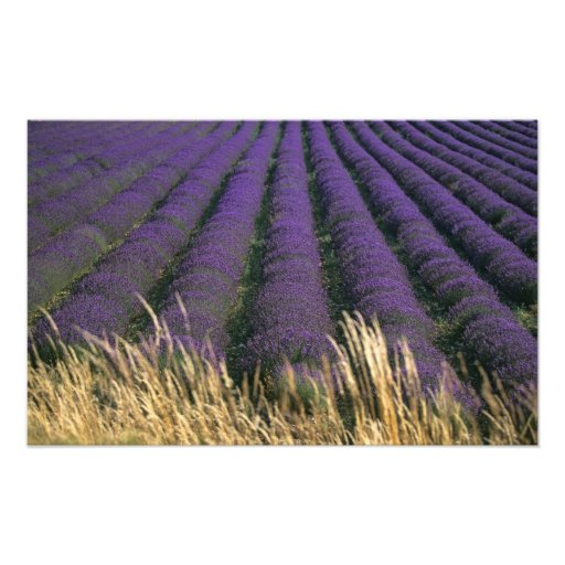 Frankreich, PACA, Albes-De-Haute-Provence, 2 Photodrucke