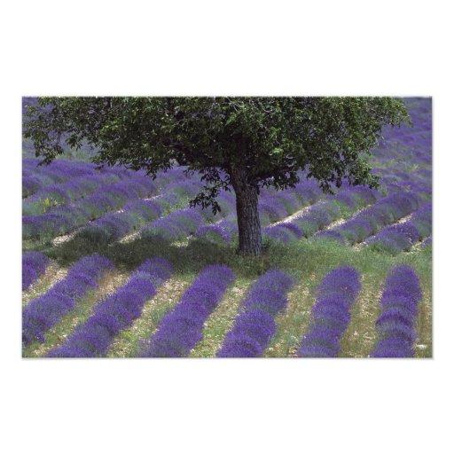 Frankreich, PACA, Albes-De-Haute-Provence, 2 Fotodruck