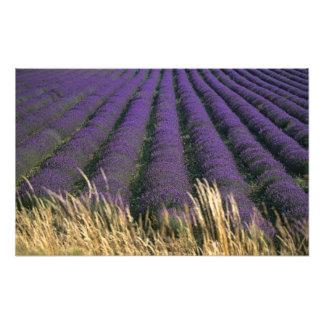 Frankreich, PACA, Albes-De-Haute-Provence, 3 Kunst Photo