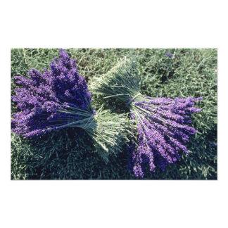 Frankreich PACA Albes-De-Haute-Provence Bündel Fotodruck