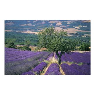 Frankreich, PACA, Albes-De-Haute-Provence, Foto Druck