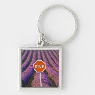 Frankreich, Provence. Reihen des Lavendels und des Silberfarbener Quadratischer Schlüsselanhänger