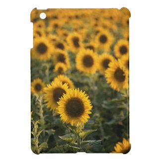 Frankreich, Vaucluse, Sonnenblumefeld iPad Mini Hülle