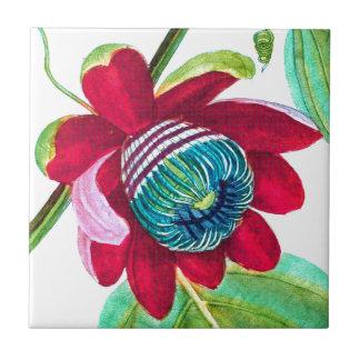 Französische botanische Kunst - Passionsblume 1819 Keramikfliese