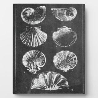 französische botanische Kunsttafel Küstenseashells Fotoplatte
