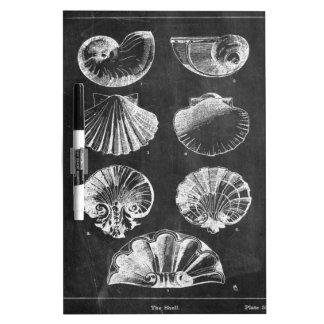 französische botanische Kunsttafel Küstenseashells Memoboard