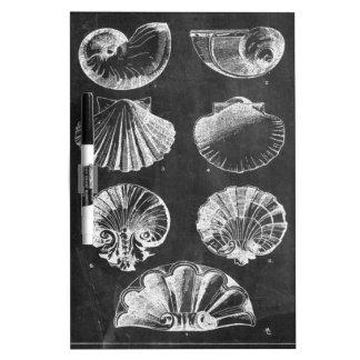 französische botanische Kunsttafel Küstenseashells Trockenlöschtafel