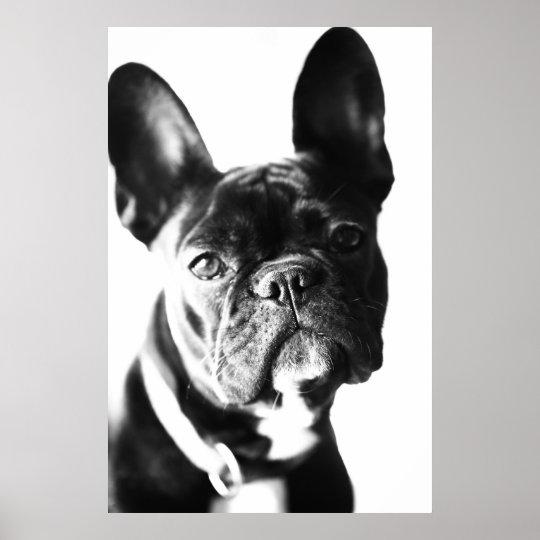französische Bulldogg Poster