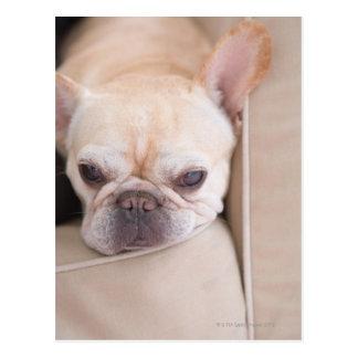 Französische Bulldogge, die auf Sofa stillsteht Postkarte