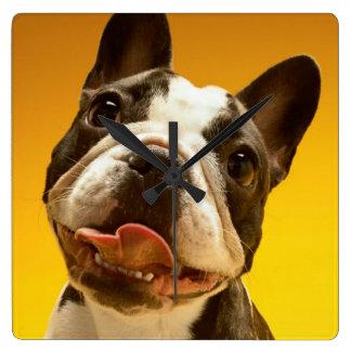 Französische Bulldogge, die oben schaut Quadratische Wanduhr