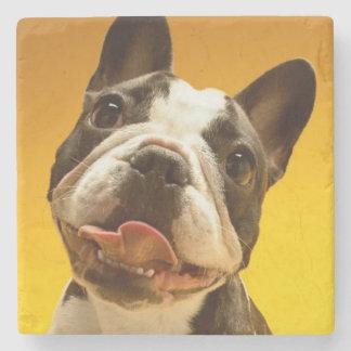 Französische Bulldogge, die oben schaut Steinuntersetzer