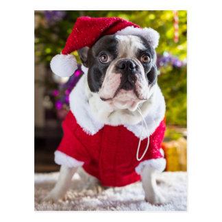 Französische Bulldogge erwägt Weihnachten Postkarte