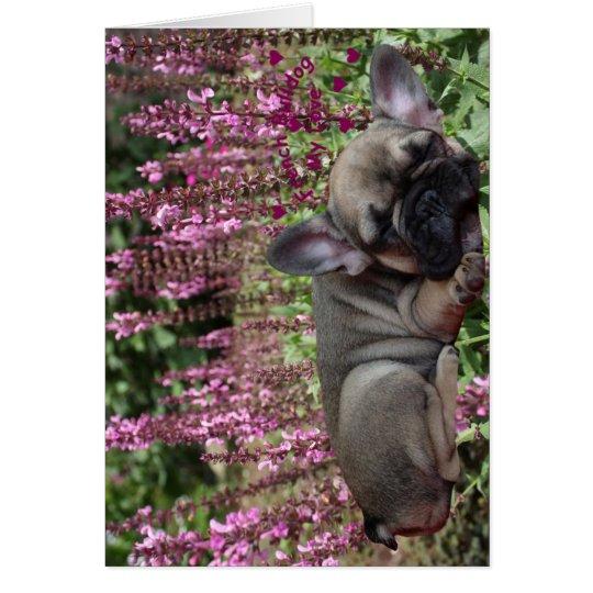 Französische Bulldogge Grußkarten